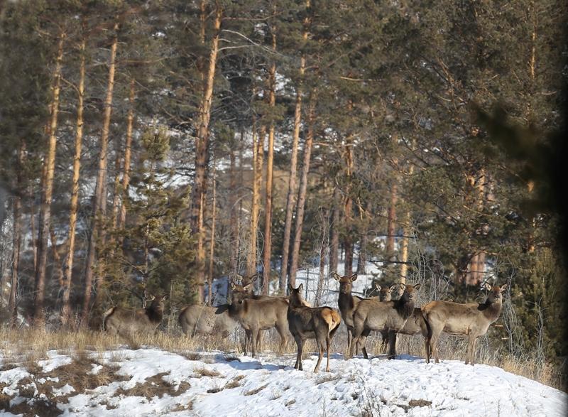 Байкальская охота